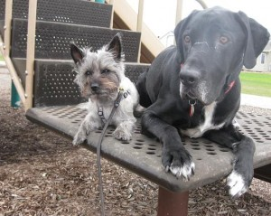 Two dogs on playground