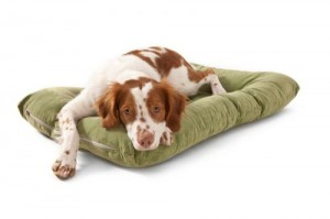 Dog bed at dogIDs