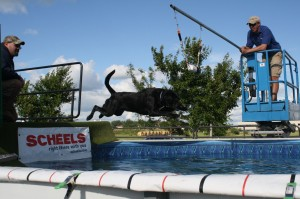 Daisy Birkeland Super Launch, dog dock jumping