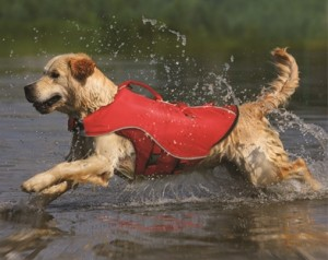 Surf and Turf life jacket at dogIDs.com