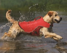 Dog in life jacket at lake