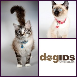 Cats with ID tags