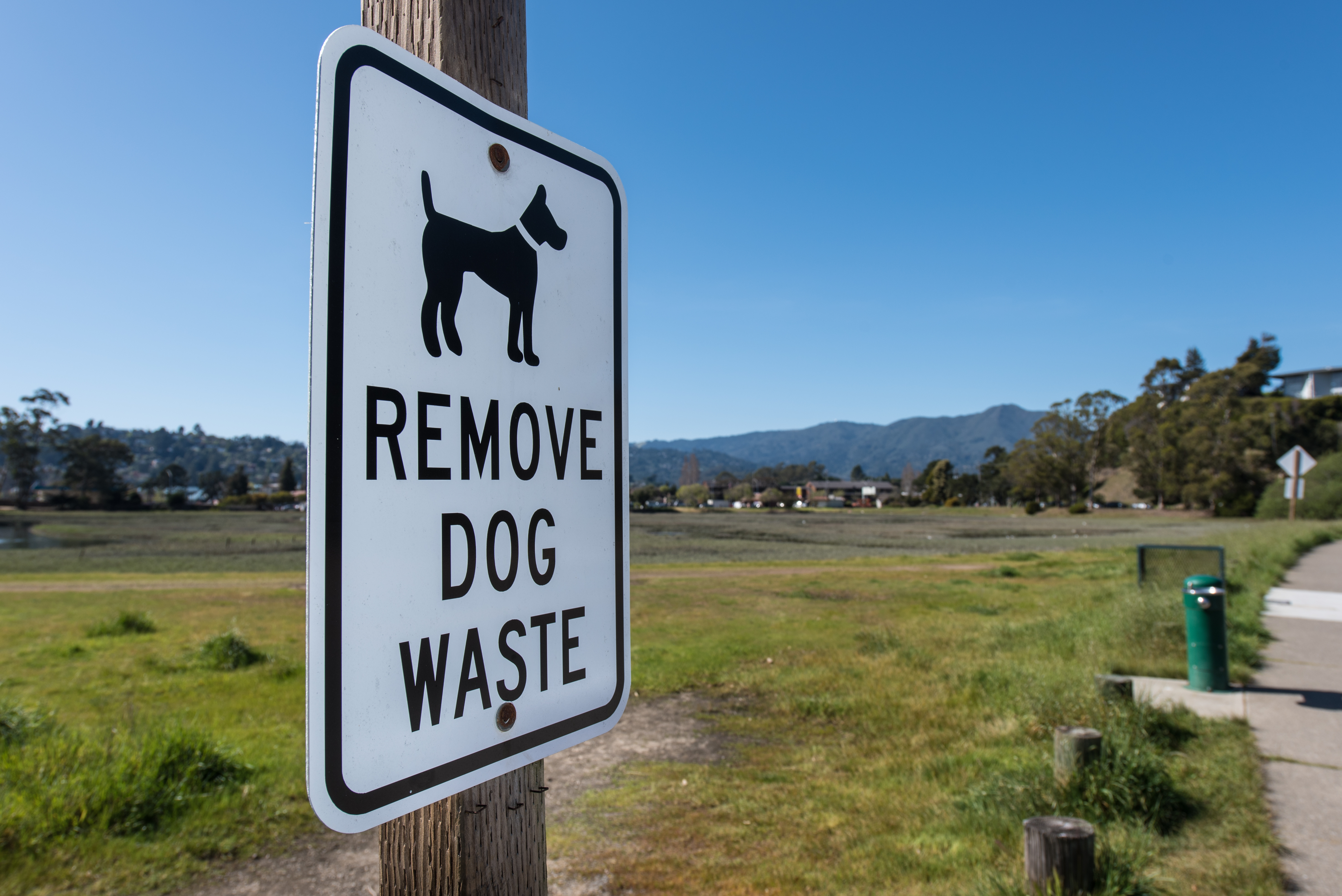 Why you need to clean up after your dog's waste