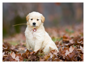 puppy outside in fall leaves