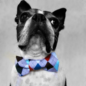 Bowties are a cute and easy gift for fussy pups