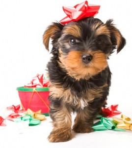 Dog with present bows
