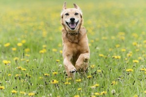 Does your dog have allergies?