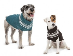Two dogs in sweaters