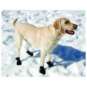 dog wearing dog boots in snow