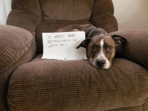 Dog on chair with resolutions sign