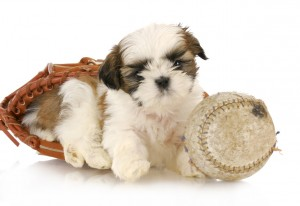 Puppy sitting in baseball glove next to baseball