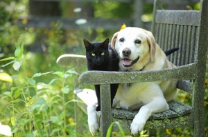 Dog and cat on bench outside