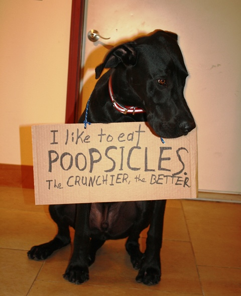 How To Get A Dog To Stop Eating His Poop