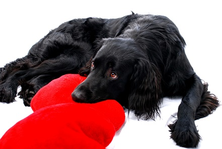 Valentine's Day: 4 Ways to Show Your Dog You Love Him