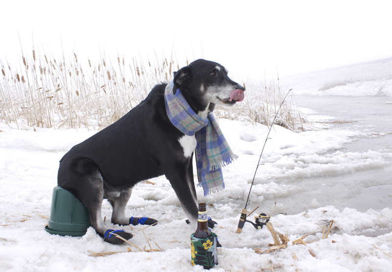 Meet Buzz: The Old Dog who Learns New Tricks