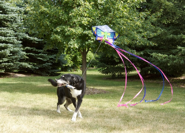 Buzz Flying a Kite