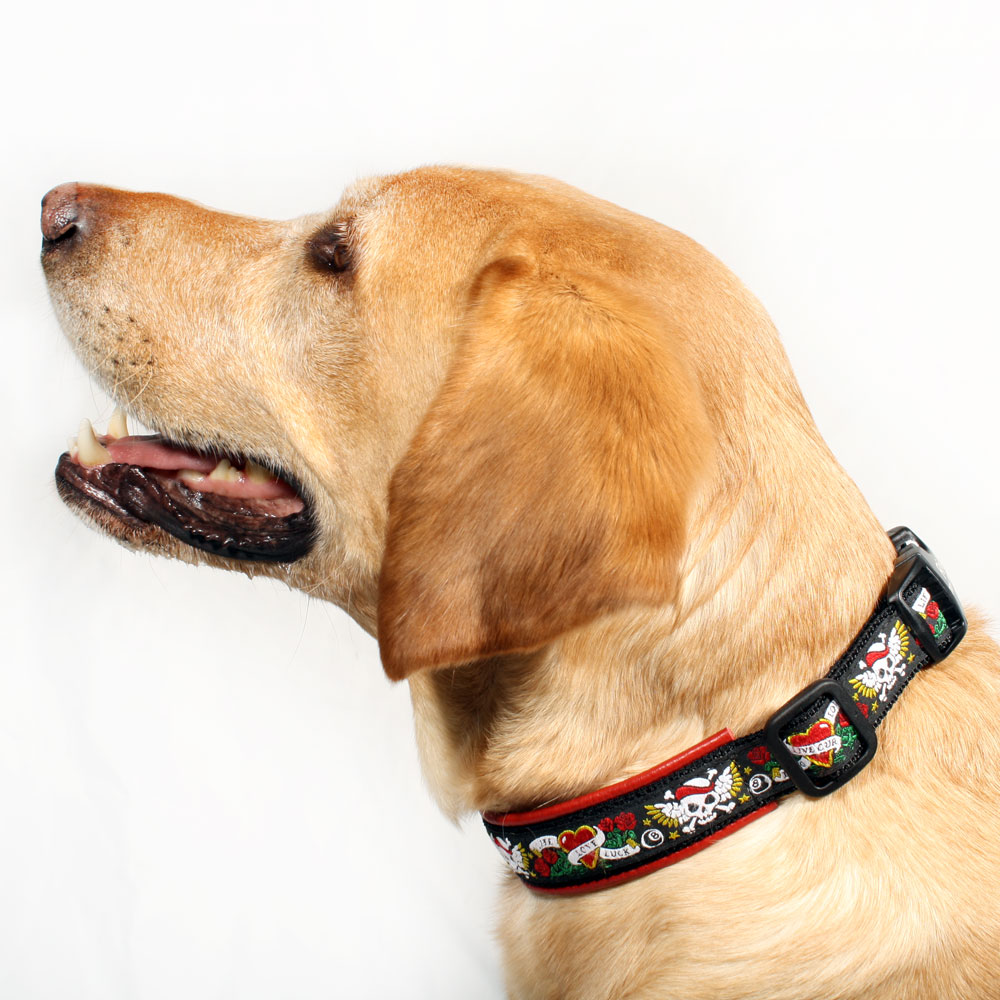 The Power of Padded Dog Collars