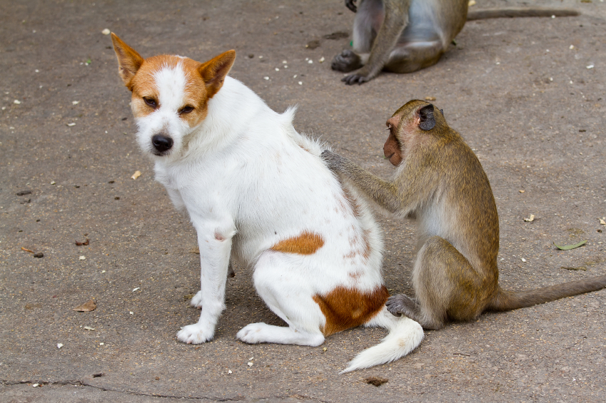 Dog and a monkey