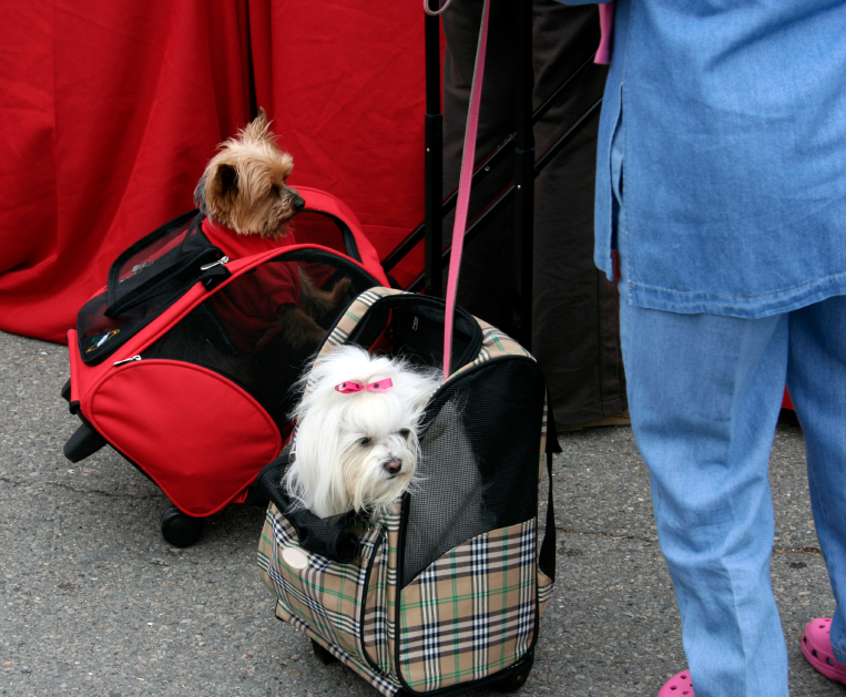 Two dogs in carrying bags