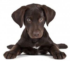 Common Puppy Potty Training Mistakes