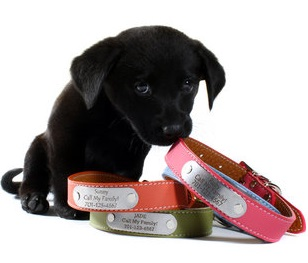 Puppy and Italian Leather collars