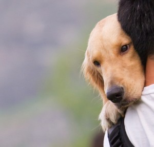 Dog hugging a person