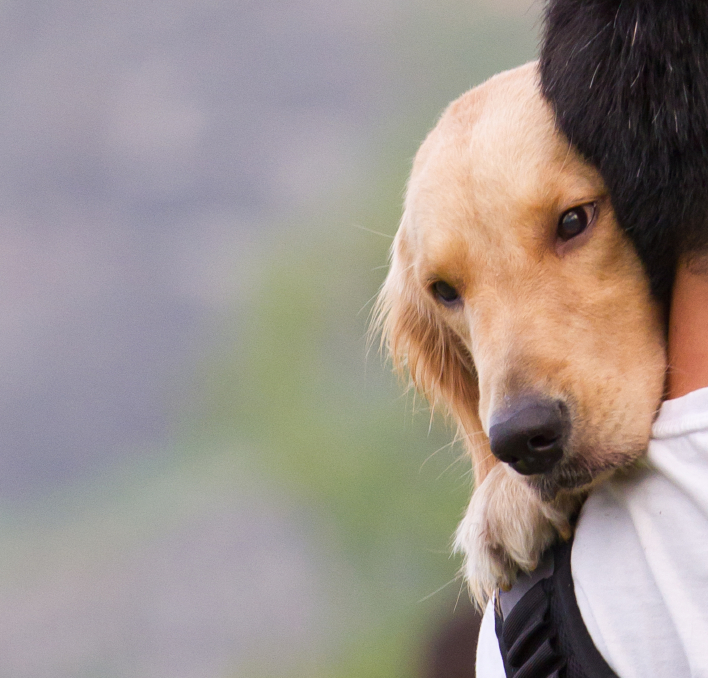Reunited and It Feels So Good: Why Your Pet Needs ID