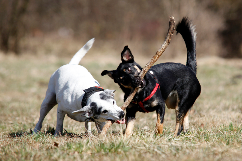 Common Mistakes at the Dog Park
