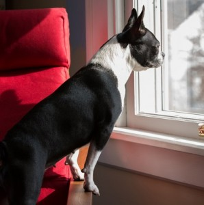 When to give your dog more freedom
