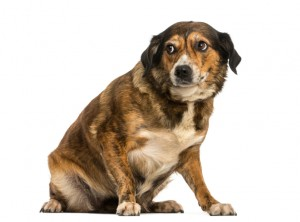 Crossbreed dog sitting, looking intimidated, isolated on white