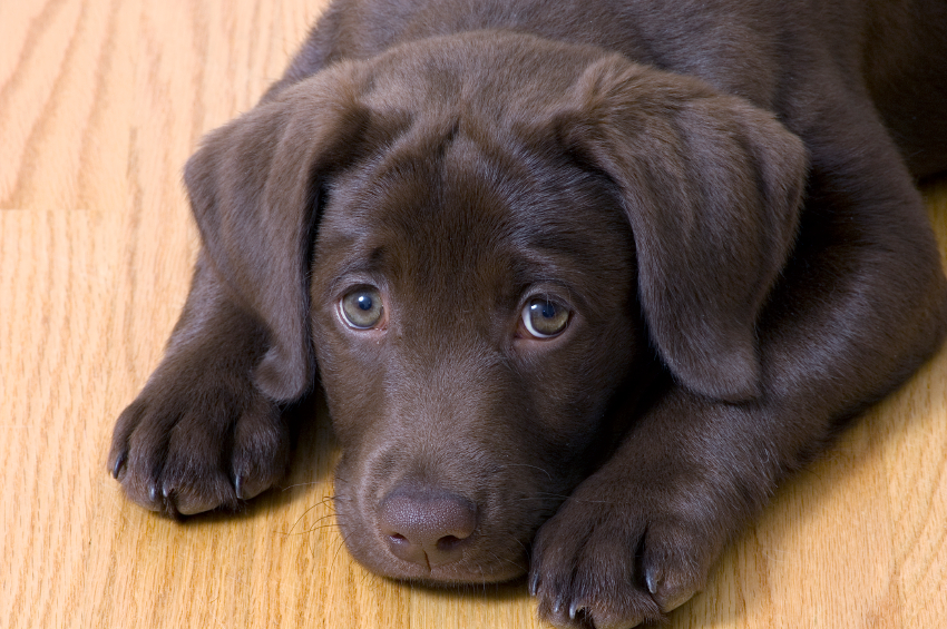 Five Ways to Prepare for a Puppy