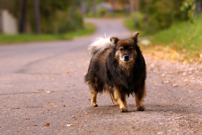 What to Do When an Off-Leash Dog Charges You