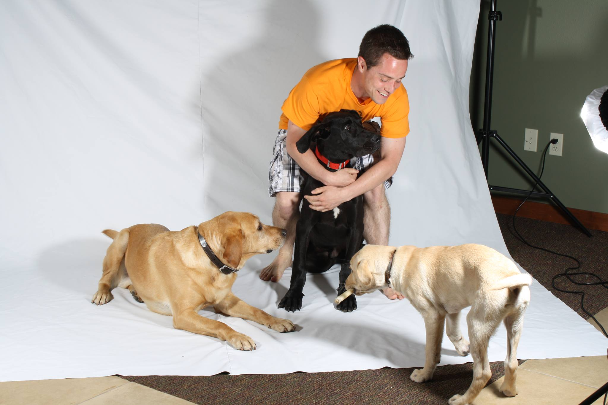 Three dogs photoshoot