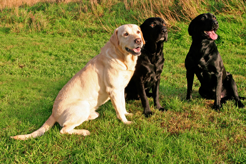 5 Commands Every Dog Should Know