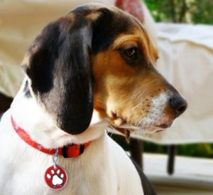 How ID tags can save your dog