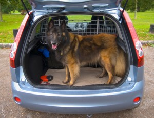 Dog travelling safe in car