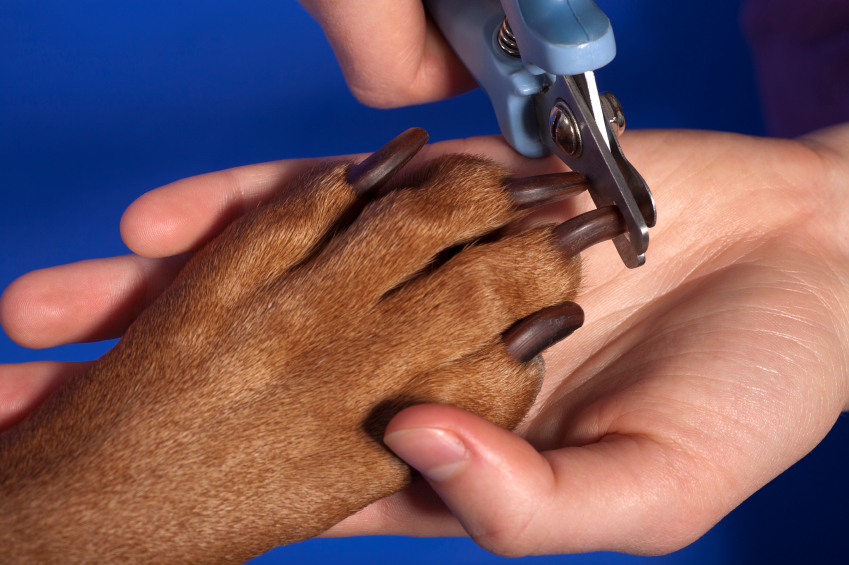 How to Cut a Dog's Nails