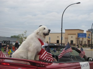 Duke the Dog, Elected Mayor