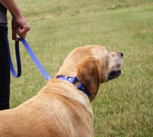 The Benefits of a Safety Collar