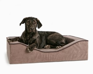 Reasons for getting an orthopedic dog bed