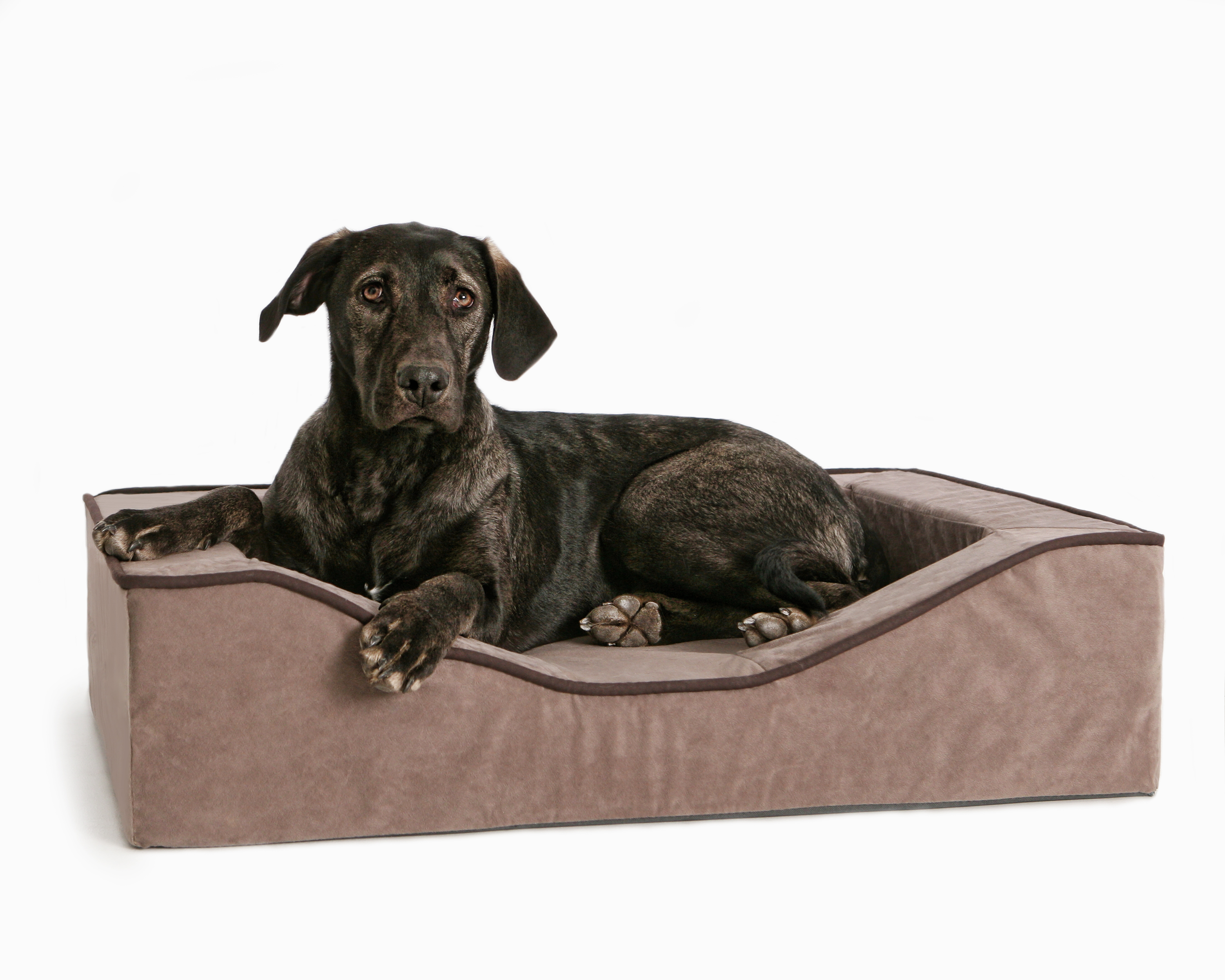 Orthopedic Dog Beds: Not Just for Seniors!