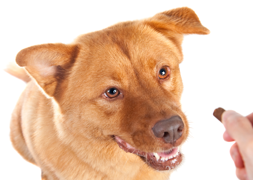 How to Teach a Dog to Take Treats Gently