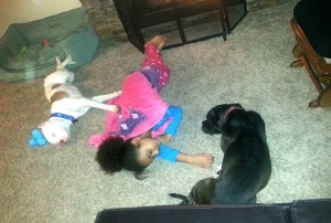 Ashley's daughter shares her nap time with  Maci and  former foster dog, Dre.