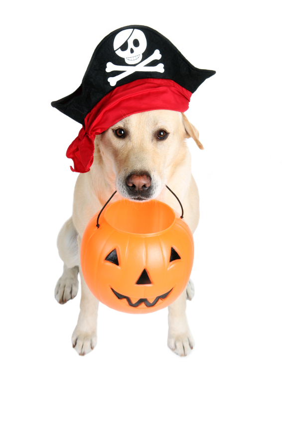 Dog wearing pirate hat and holding Halloween basket