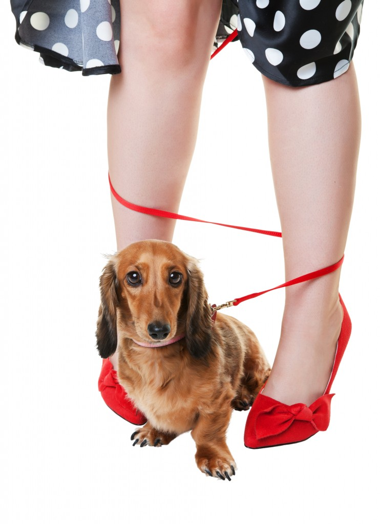 Dog with leash wrapped around legs