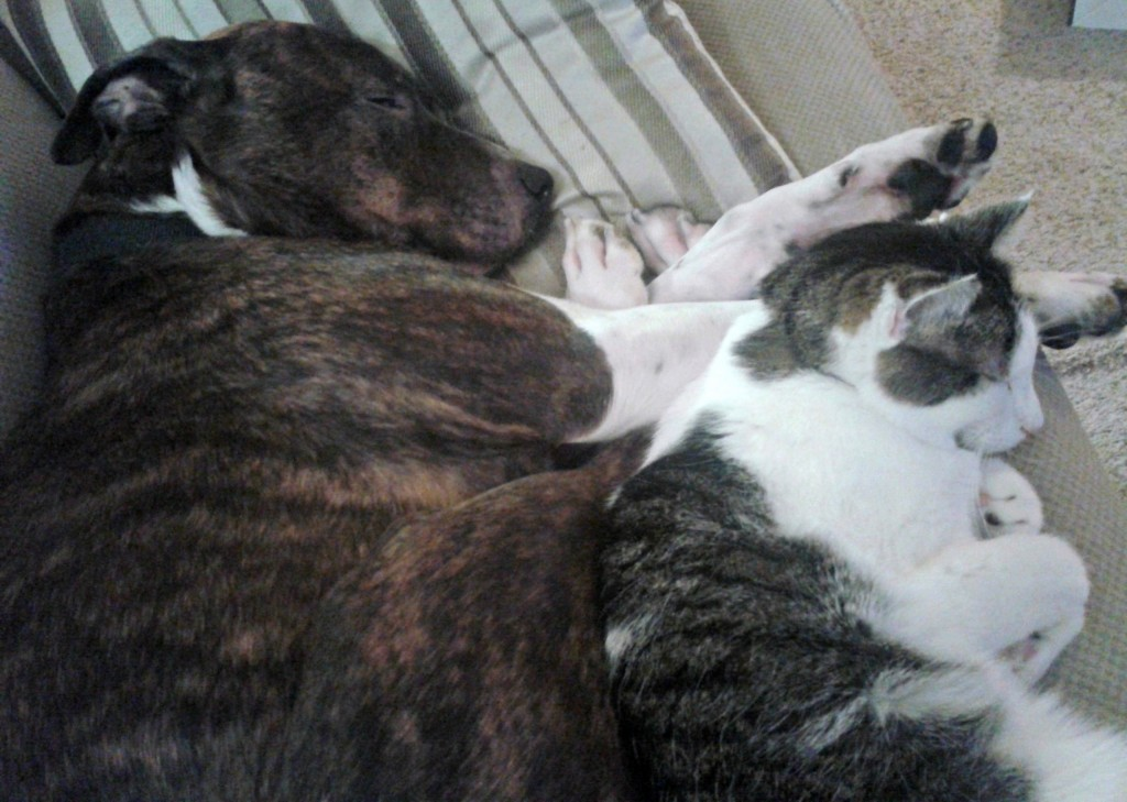 Dog and cat cuddling