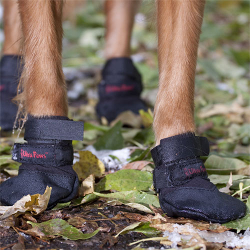 Dog Boots to Protect Dog Paws