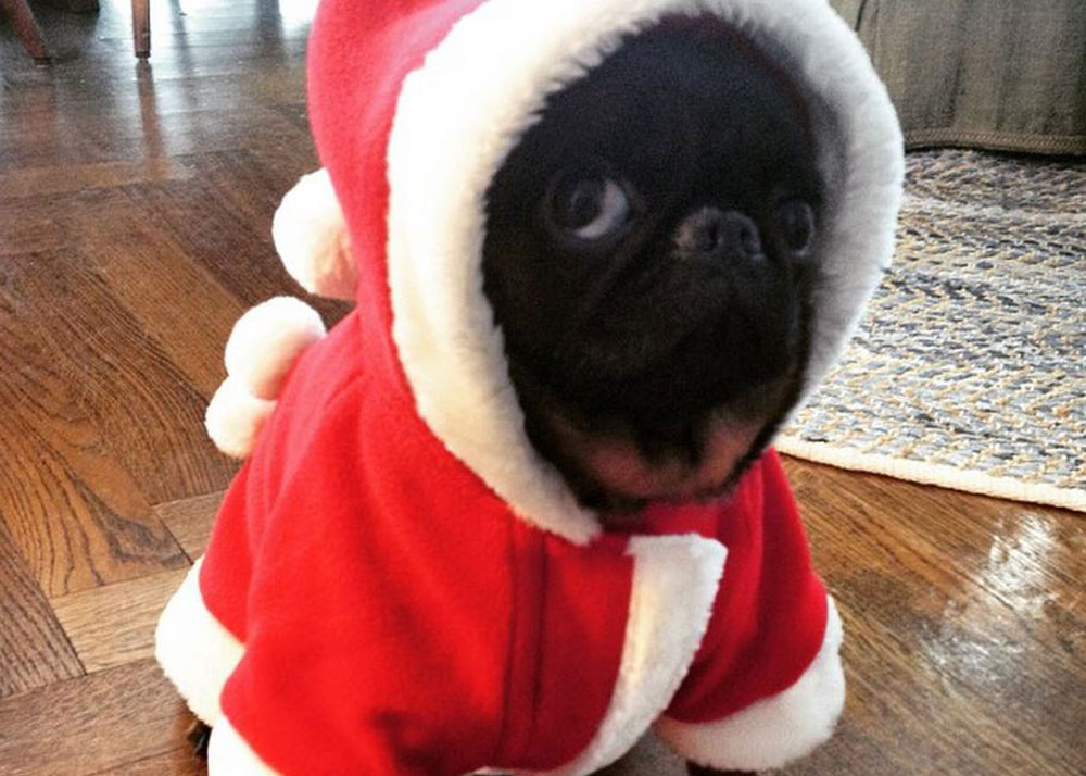 13 Dogs That Are Not Fans Of Christmas