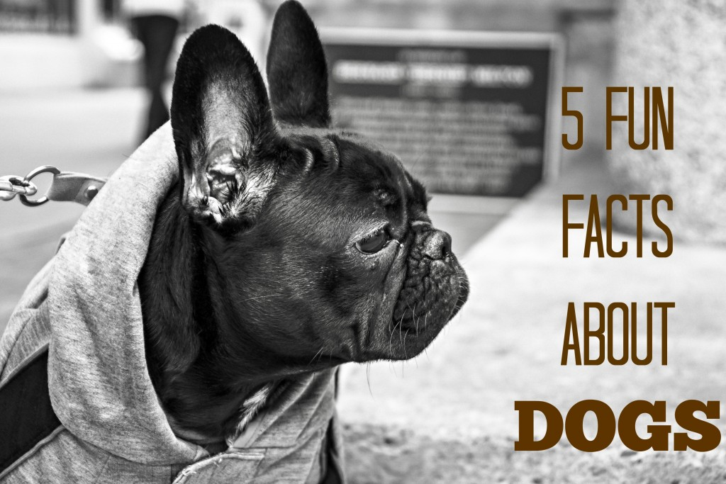 5 Fun Facts About Dogs