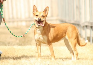 Top 3 Leashes for EveryDay Dog Ownership